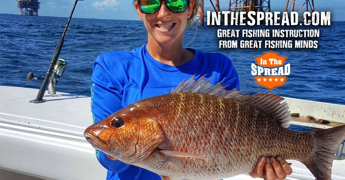 chumming mangrove snapper in the spread fishing video