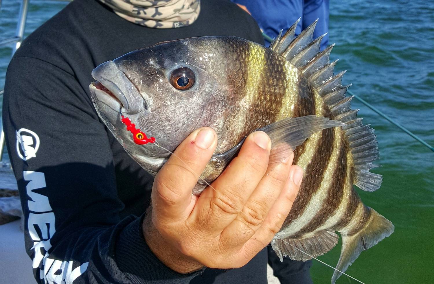 sheepshead fishing in the spread