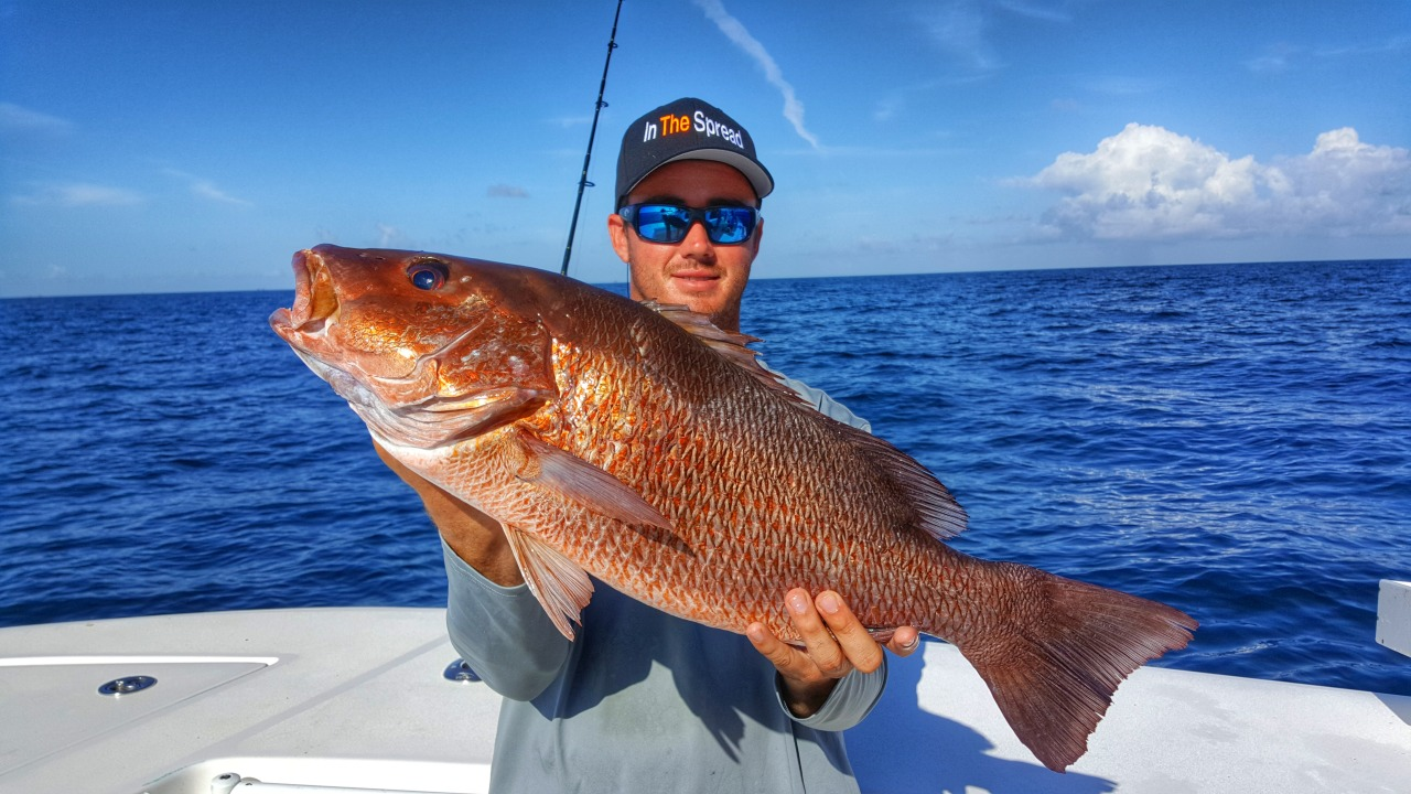 chumming mangrove snapper in the spread fishing video josh howard