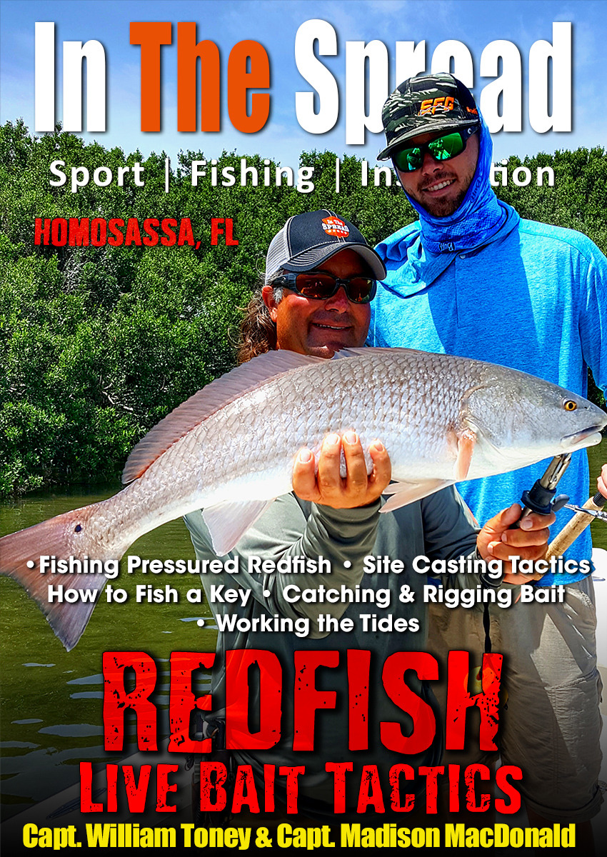 redfish live bait in the spread video william toney homosassa florida