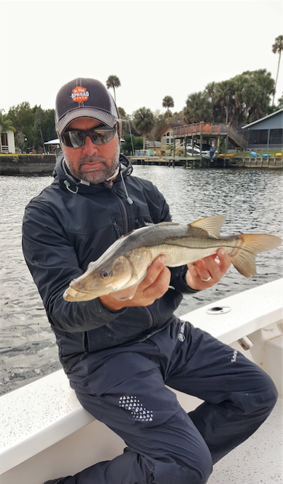 winter snook fishing in the spread william toney homosassa inshore florida