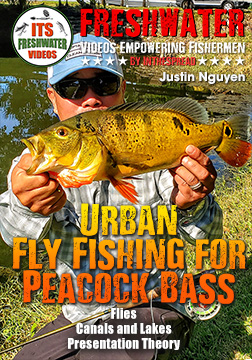 peacock bass florida in the spread justin nguyen fly fishing