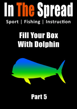 dolphin fishing tips in the spread video